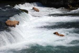 brooks-falls