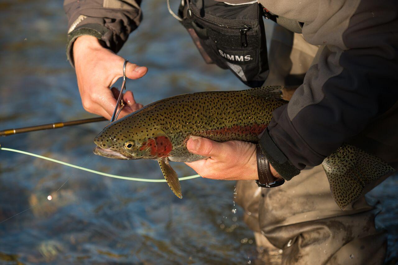 Alaska salmon fly fishing seasons no see um lodge for What fish are in season