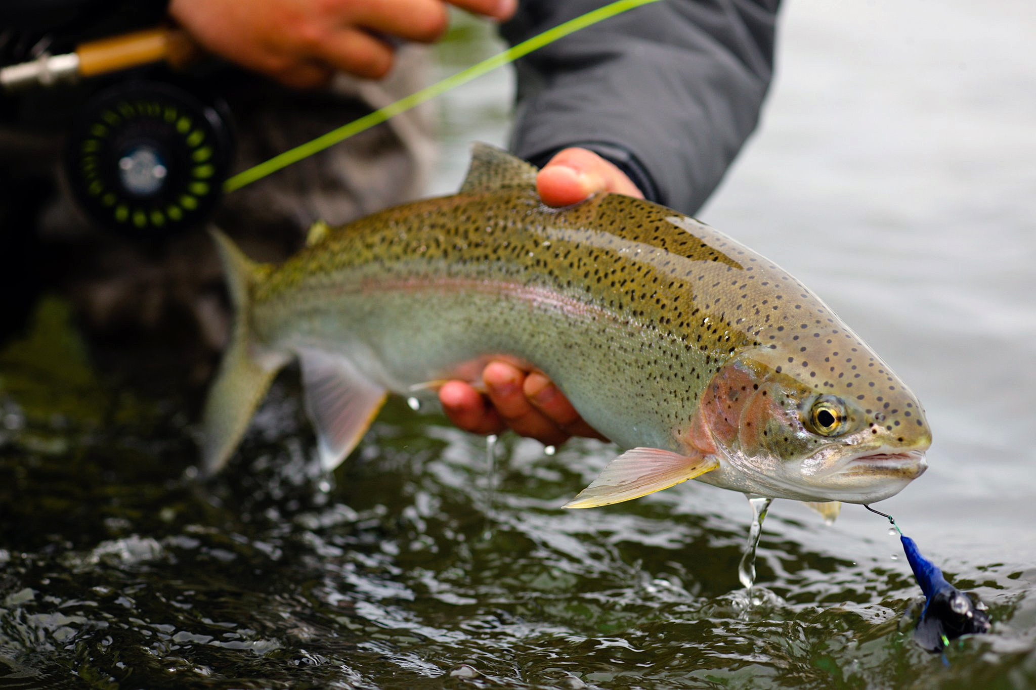 alaska fly fishing Complete your princess cruise with an unforgettable alaska fishing trip strap on your waders, princess has three great places to try your hand at fly fishing.
