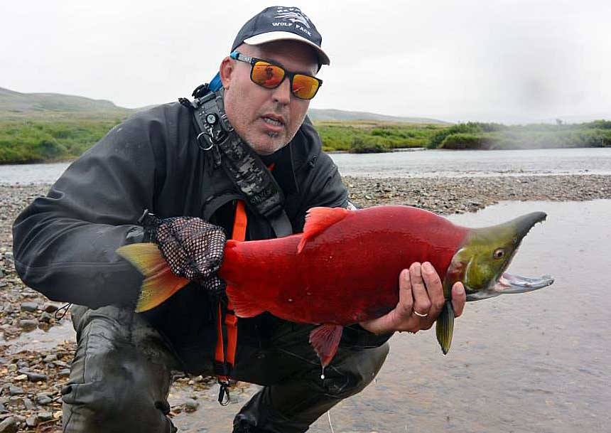 Alaska wild sockeye red salmon fly fishing trips no for Alaskan salmon fishing