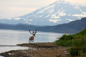 Explore the wildlife and other things to do in Anchorage.